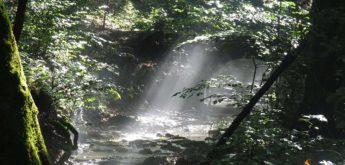 Brander Wald