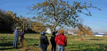 Obstbaumschnittkurs
