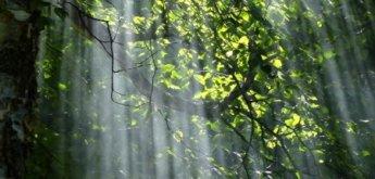 Waldbaden Meditation